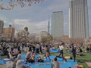 event_sakura